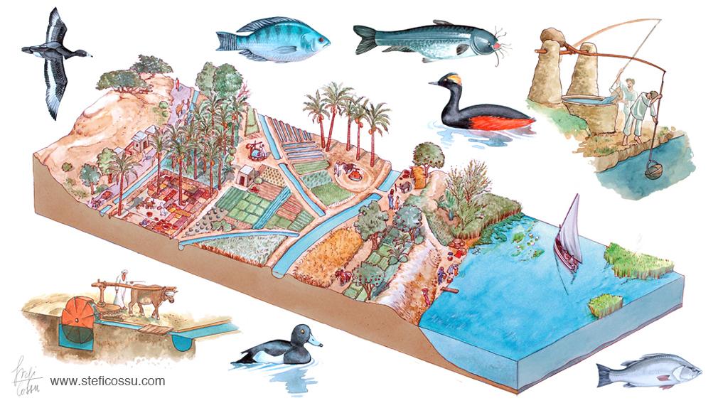 Riva del Nilo, sezione area agricola, edizioni Geodia