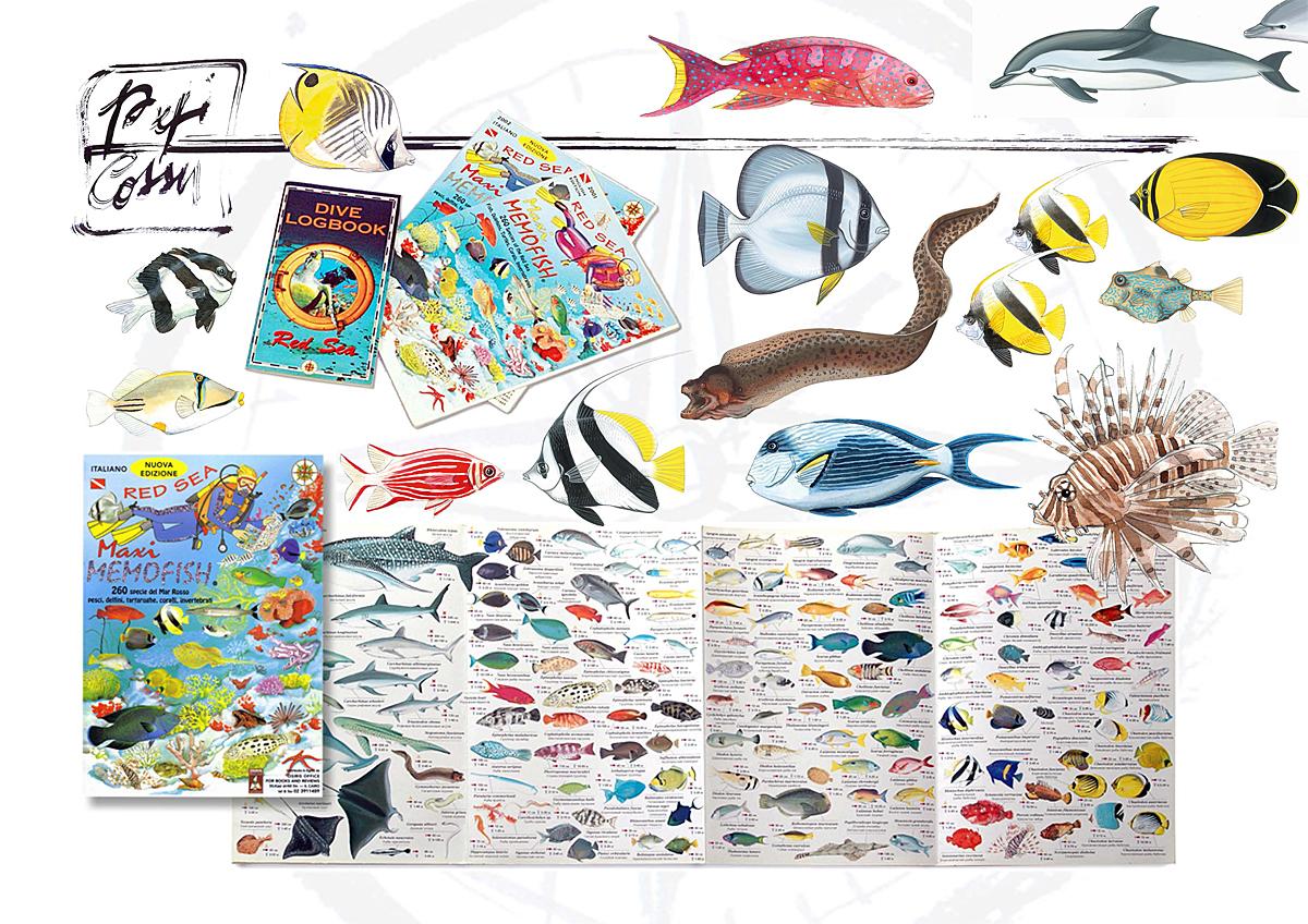 Steficossu pesci del Mar Rosso