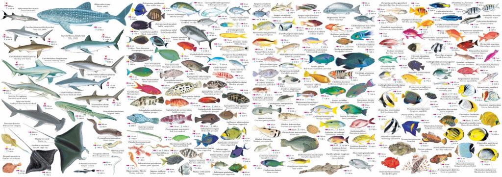 Memofish, pesci del Mar Rosso, edizioni Geodia