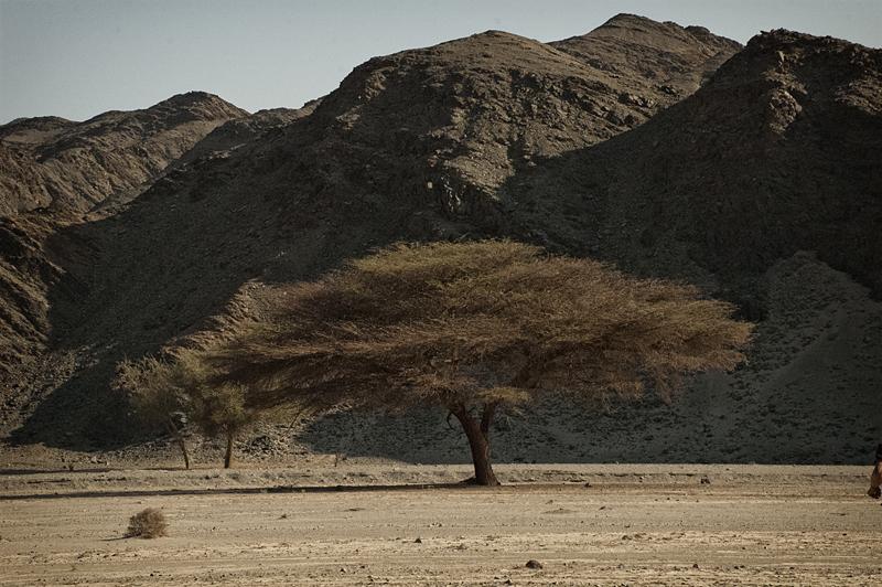Egitto, Parco naturale Wadi el Gimal