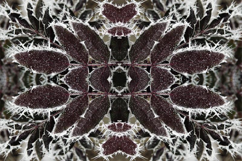 Specule, seconda serie