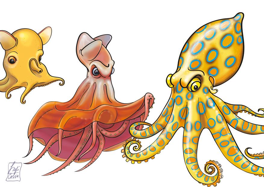 Polpi, meduse e coleotteri, edizioni Sbabam
